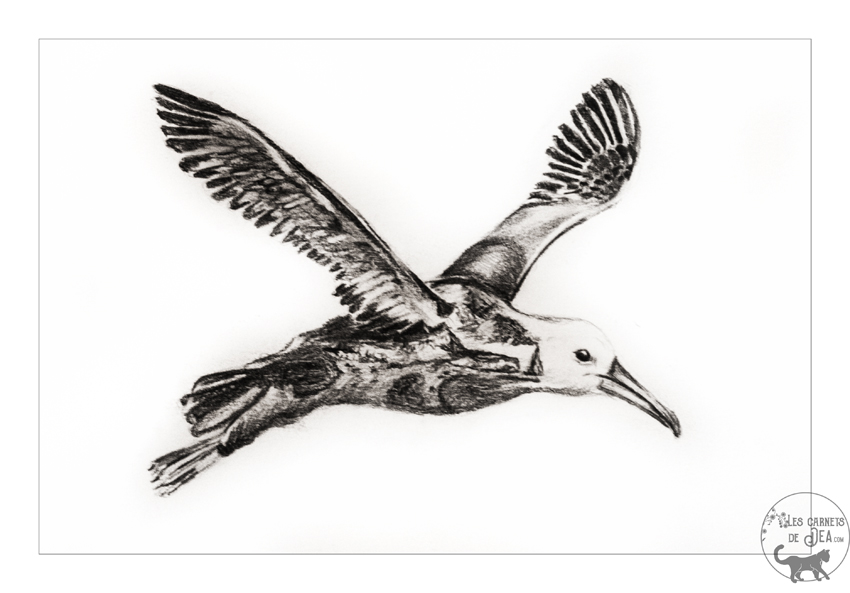 albatrosdesgalapagosweek1web